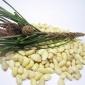 包邮小颗粒松子仁250g-华山原味松仁坚果烘焙原料批发-产地直销
